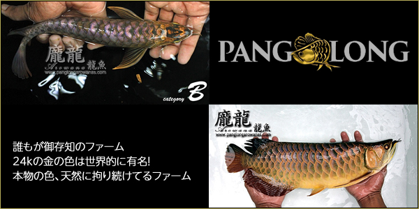 Pang Long