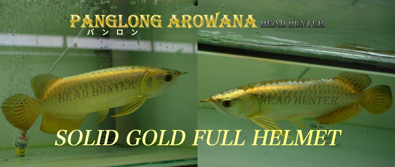 SOLID GOLD FULL HELMET